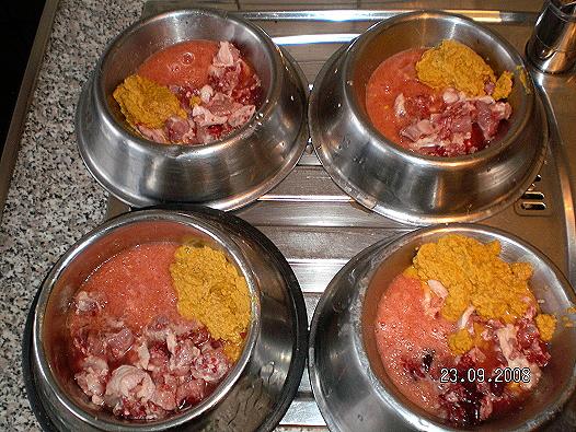 hunde gekochte kartoffeln